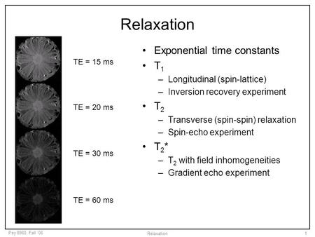 Relaxation Exponential time constants T1 T2 T2*