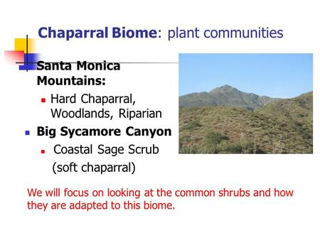 Chaparral Biome: plant communities Santa Monica Mountains: Hard Chaparral, Woodlands, Riparian Big Sycamore Canyon Coastal Sage Scrub (soft chaparral)