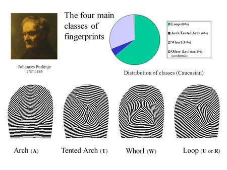 Arch (A) Tented Arch (T) Whorl (W) Loop (U or R) The four main classes of fingerprints Loop (60%) Arch/Tented Arch (6%) Whorl (34%) Other (Less than 1%)