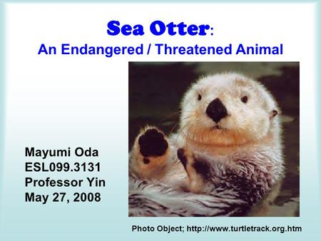 Sea Otter : An Endangered / Threatened Animal Mayumi Oda ESL099.3131 Professor Yin May 27, 2008 Photo Object;
