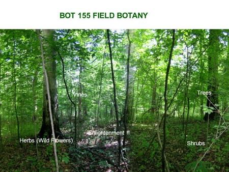 BOT 155 FIELD BOTANY Trees Herbs (Wild Flowers) Vines Shrubs Enlightenment !!