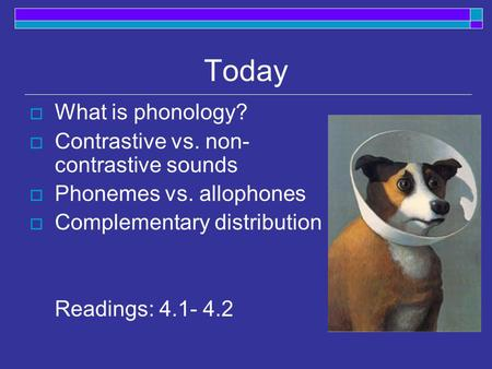 Today  What is phonology?  Contrastive vs. non- contrastive sounds  Phonemes vs. allophones  Complementary distribution Readings: 4.1- 4.2.