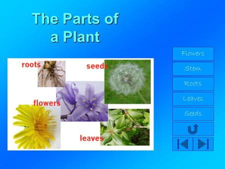 The Parts of a Plant Flowers Stem Roots Leaves Seeds.