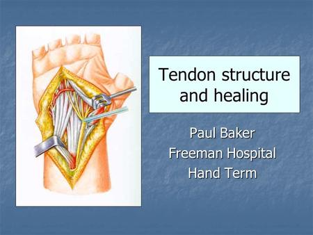 Tendon structure and healing Paul Baker Freeman Hospital Hand Term.