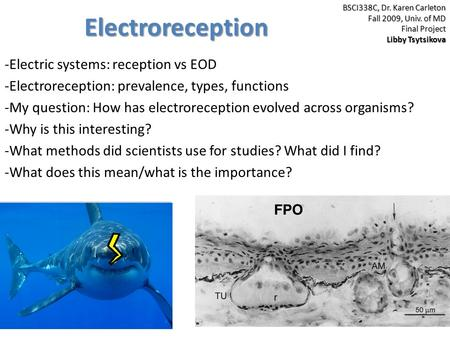 Electroreception -Electric systems: reception vs EOD -Electroreception: prevalence, types, functions -My question: How has electroreception evolved across.