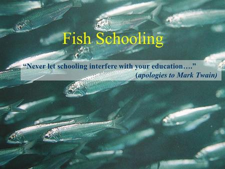 "Fish Schooling ""Never let schooling interfere with your education…."" (apologies to Mark Twain)"