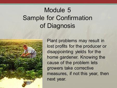 Module 5 Sample for Confirmation of Diagnosis Plant problems may result in lost profits for the producer or disappointing yields for the home gardener.