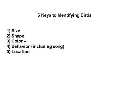 5 Keys to Identifying Birds 1)Size 2)Shape 3)Color – 4)Behavior (including song) 5)Location.