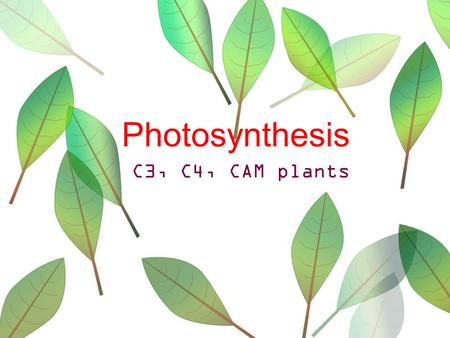 Photosynthesis C3, C4, CAM plants.