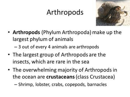 Arthropods Arthropods (Phylum Arthropoda) make up the largest phylum of animals – 3 out of every 4 animals are arthropods The largest group of Arthropods.