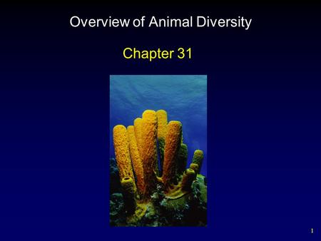 1 Overview of Animal Diversity Chapter 31. 2 General Features of Animals Heterotrophs Multicellular Able to move from place to place Diverse in form and.