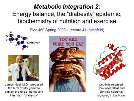 "Metabolic Integration 2: Energy balance, the ""diabesity"" epidemic, biochemistry of nutrition and exercise Bioc 460 Spring 2008 - Lecture 41 (Miesfeld)"
