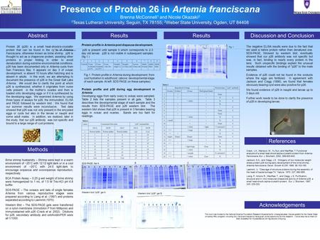 Presence of Protein 26 in Artemia franciscana Brenna McConnell 1 and Nicole Okazaki 2 1 Texas Lutheran University, Seguin, TX 78155; 2 Weber State University,