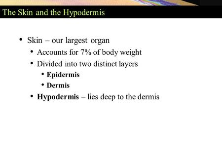 The Skin and the Hypodermis Skin – our largest organ Accounts for 7% of body weight Divided into two distinct layers Epidermis Dermis Hypodermis – lies.