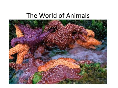 The World of Animals. I. Life evolved in the oceans A. Least stressful environment B. Moderating temperature C. Closest to osmotic properties D. Buoyancy.