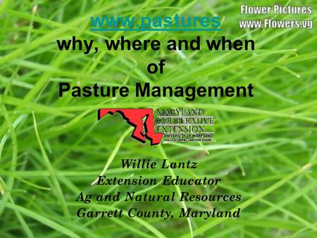 Www.pastures www.pastures why, where and when of Pasture Management Willie Lantz Extension Educator Ag and Natural Resources Garrett County, Maryland.