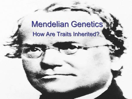 How Are Traits Inherited?
