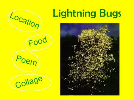 Lightning Bugs Location Food Poem Collage Where do they Live Home.