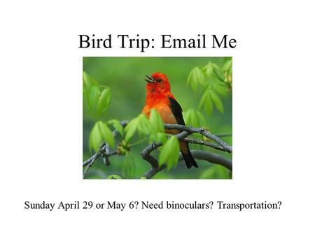Bird Trip: Email Me Sunday April 29 or May 6? Need binoculars? Transportation?