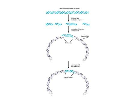 Polymerase Chain Reaction - PCR The photocopier of molecular biology.