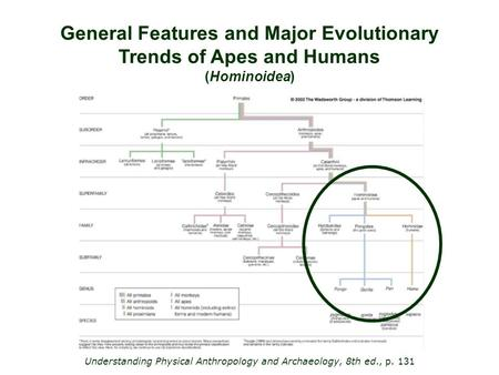 General Features and Major Evolutionary Trends of Apes and Humans (Hominoidea) Understanding Physical Anthropology and Archaeology, 8th ed., p. 131.