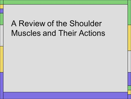 A Review of the Shoulder Muscles and Their Actions.