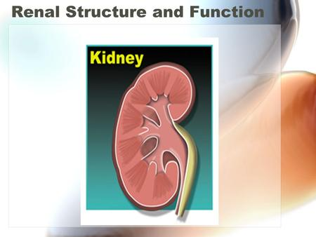 Renal Structure and Function. Introduction Main function of kidney is excretion of waste products (urea, uric acid, creatinine, etc). Other excretory.