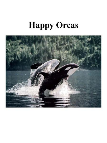 Happy Orcas. Dead Orcas State of Southern Resident Orcas Almost 20% orcas died between 1995 and 2000. Reproductive females have not produced young in.