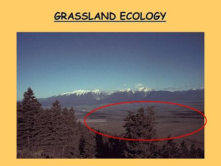 GRASSLAND ECOLOGY. WORLD GRASSLANDS NORTH AMERICAN GRASSLANDS REFLECT WEATHER PATTERNS.