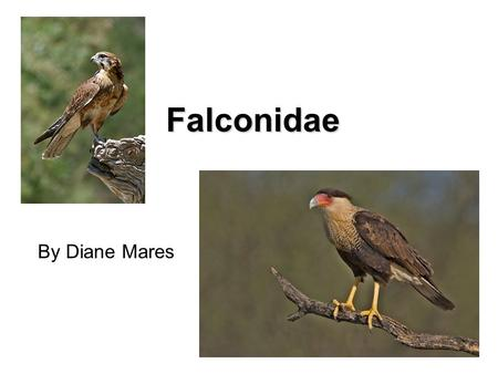Falconidae By Diane Mares. Falconiformes F. Cathartidae – New World Vultures F. Pandionidae – Osprey F. Accipitridae – Hawks and Eagles F. Sagittariidae.