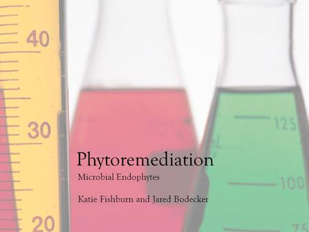 Microbial Endophytes Katie Fishburn and Jared Bodecker