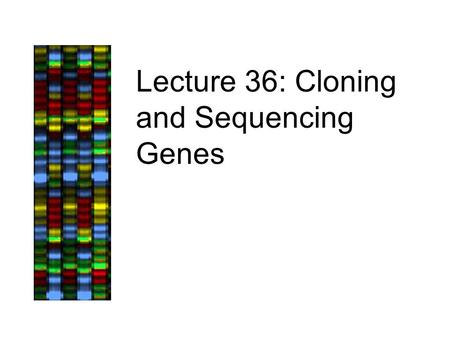 "Lecture 36: Cloning and Sequencing Genes. Lecture Outline, 12/5/05 Case Study: BRCA1, continued –Cloning DNA fragments into plasmids other vectors ""Libraries"""