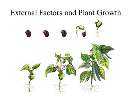 "External Factors and Plant Growth. Plant Growth Regulators The word hormone comes from the Greek word ""To excite"" and hormones stimulate biochemical activities."