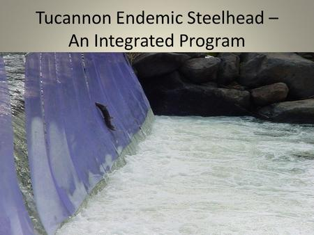 Tucannon Endemic Steelhead – An Integrated Program picture.