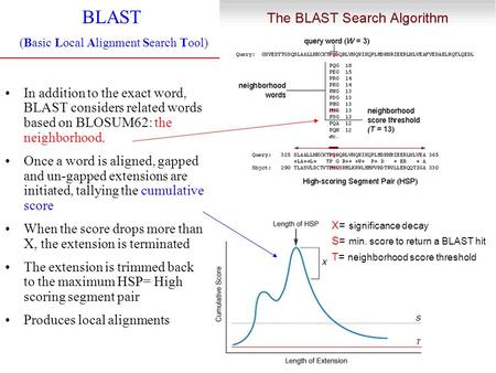 BLAST (Basic Local Alignment Search Tool) In addition to the exact word, BLAST considers related words based on BLOSUM62: the neighborhood. Once a word.