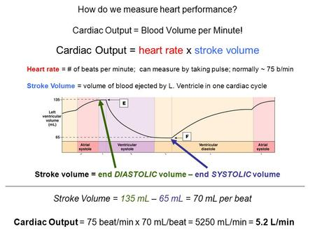 How do we measure heart performance? Cardiac Output = Blood Volume per Minute! Cardiac Output = heart rate x stroke volume Heart rate = # of beats per.