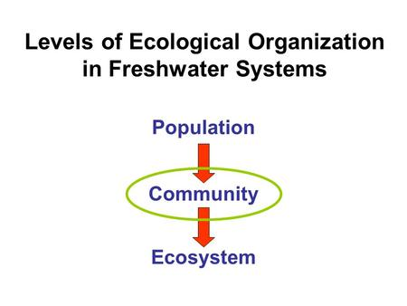 Levels of Ecological Organization in Freshwater Systems Population Community Ecosystem.