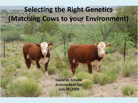Selecting the Right Genetics (Matching Cows to your Environment) David W. Schafer Arizona Beef Day July 29, 2009.