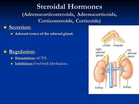 Secretion: Adrenal cortex of the adrenal gland. Regulation: