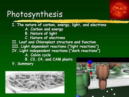 Photosynthesis I. The nature of carbon, energy, light, and electrons A. Carbon and energy B. Nature of light C. Nature of electrons II. Leaf and Chloroplast.