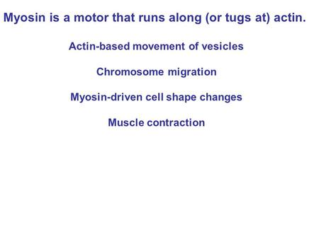 Myosin is a motor that runs along (or tugs at) actin. Actin-based movement of vesicles Chromosome migration Myosin-driven cell shape changes Muscle contraction.