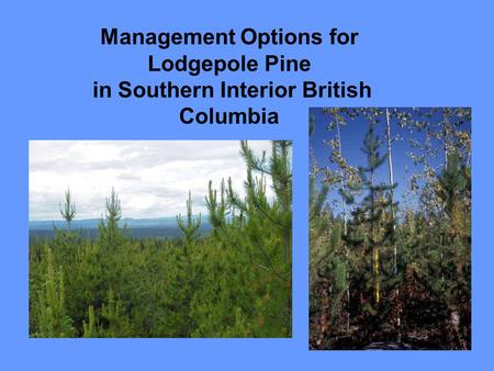 Management Options for Lodgepole Pine in Southern Interior British Columbia.