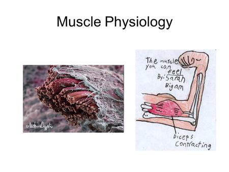 Muscle Physiology. Outline: Skeletal Muscle 1)Somatic Motor pathways 2)Neuromuscular junction (synapse) 3)Excitation of muscle cells 4)Contraction of.