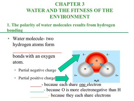 1. The polarity of water molecules results from hydrogen bonding Water molecule- two hydrogen atoms form ____________________ bonds with an oxygen atom.
