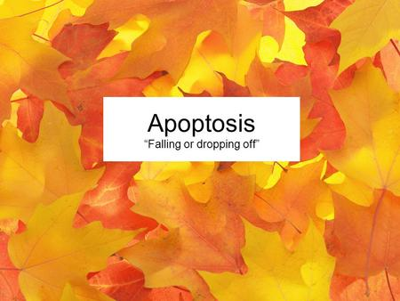 "Apoptosis ""Falling or dropping off"". Ughhhh….."