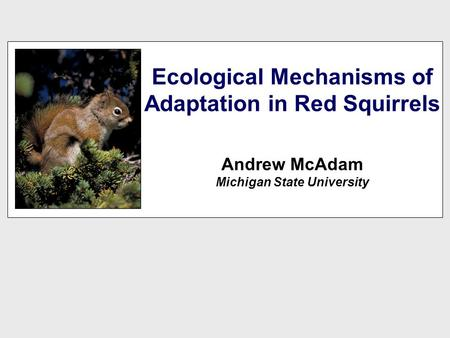 Ecological Mechanisms of Adaptation in Red Squirrels Andrew McAdam Michigan State University.