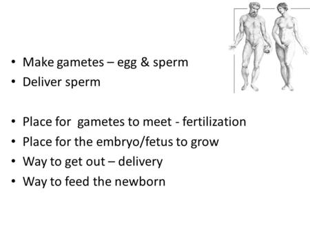 Make gametes – egg & sperm Deliver sperm Place for gametes to meet - fertilization Place for the embryo/fetus to grow Way to get out – delivery Way to.