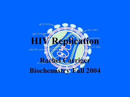 HIV Replication Rachel Carriger Biochemistry Fall 2004.