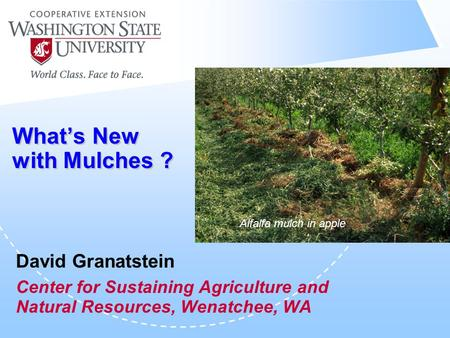 What's New with Mulches ? David Granatstein Center for Sustaining Agriculture and Natural Resources, Wenatchee, WA Alfalfa mulch in apple.