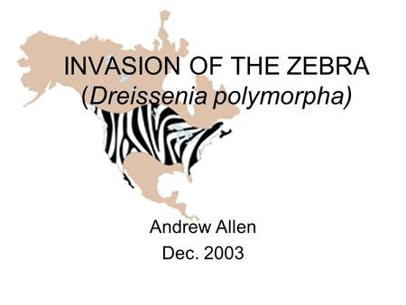 INVASION OF THE ZEBRA (Dreissenia polymorpha) Andrew Allen Dec. 2003.